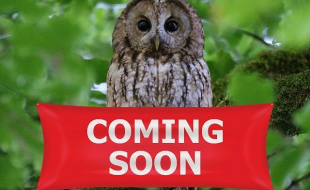 Tawny owl with 'coming soon' sign in front